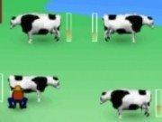 vaci de muls