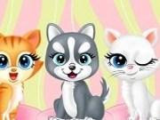 Salonul pentru pisicute rasfatate