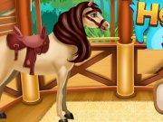 Ingrijire si SPA pentru cai