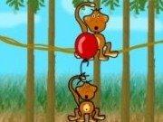 Maimute pe liane